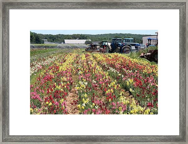 Flowers On The Farm-2 Framed Print