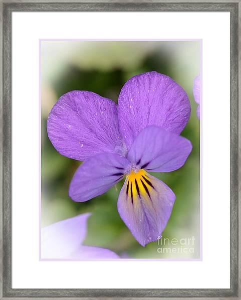 Flowers That Smile Framed Print