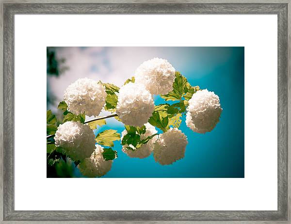 Framed Print featuring the photograph Flowers With Blue Sky by Raimond Klavins