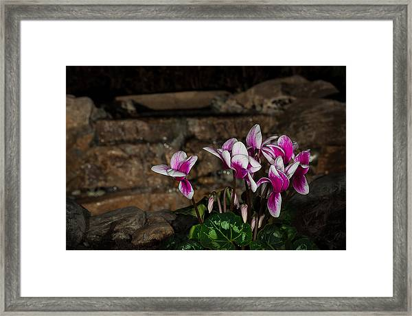 Flowers With Waterfall Backdrop Framed Print
