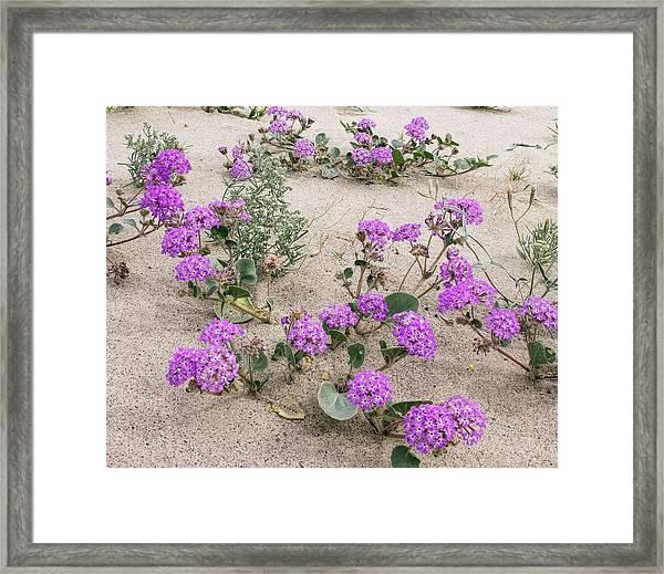 Flowery Sand-dunes Framed Print