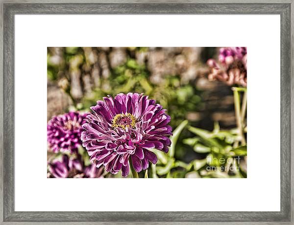 Flowery Sketches Framed Print
