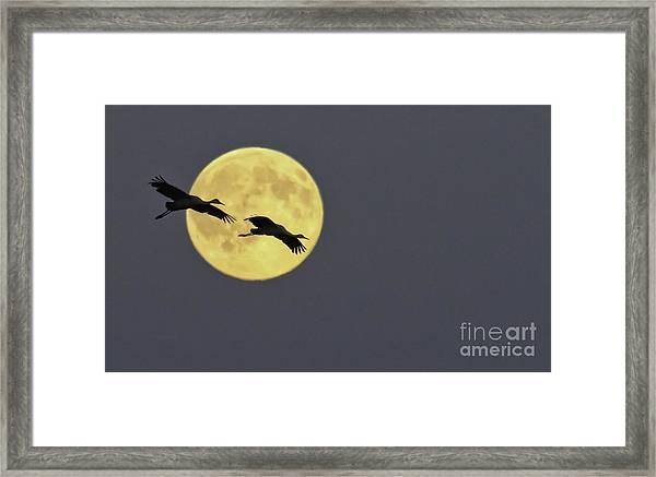 Moonlight Flight Framed Print