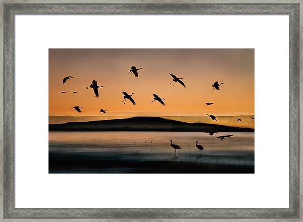 Fly-in At Sunset Framed Print