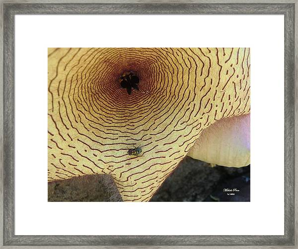 Fly To Me Framed Print