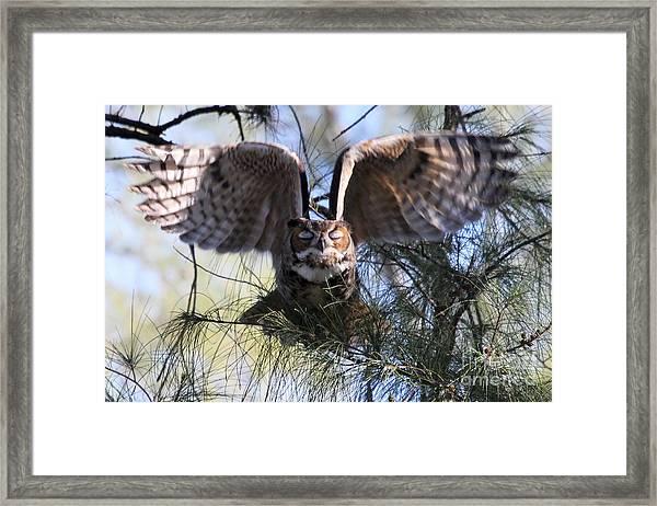Flying Blind - Great Horned Owl Framed Print
