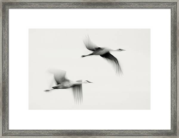 Flying Dreams Framed Print