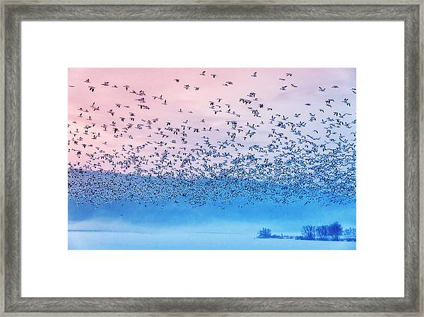 Flying In The Fogging Morning Framed Print