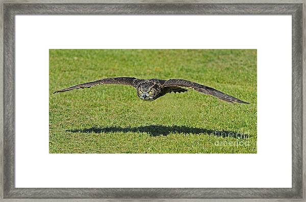 Flying Tiger... Framed Print