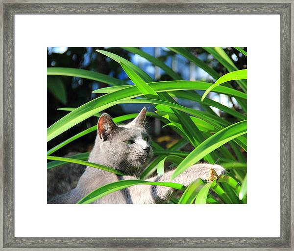 Focus Framed Print by Debbie Cundy