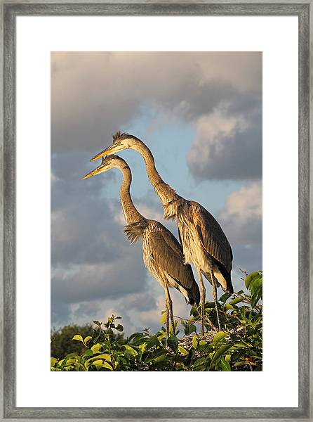 Focused Attention Framed Print