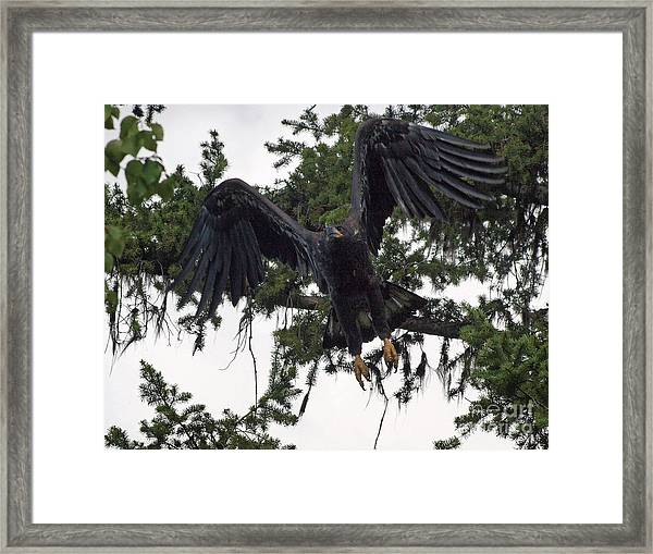 Focused On Prey Framed Print