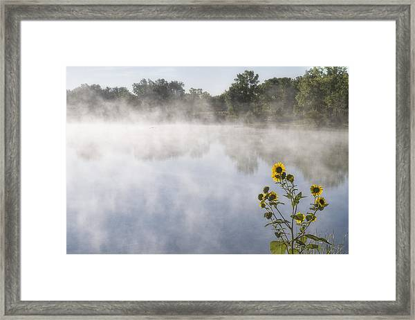 Framed Print featuring the photograph Fog And Sunflowers by Rob Graham