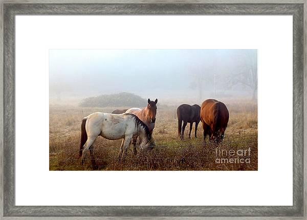 Fog Ponies Framed Print
