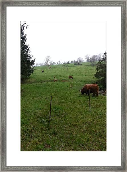 Foggy Day On The Farm Framed Print