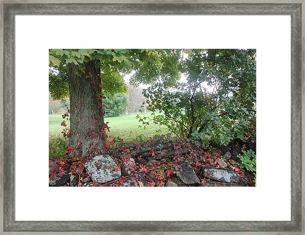 Foggy Fall Framed Print