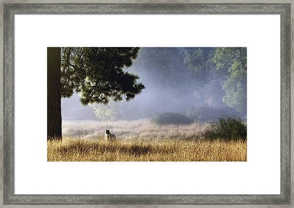 Foggy Grotto Framed Print
