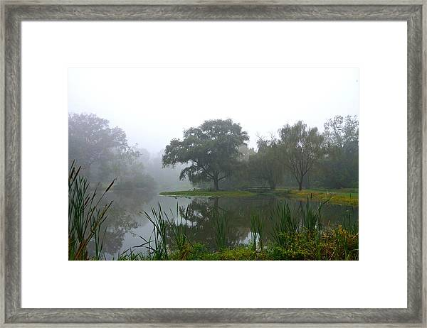Foggy Morning At The Willows Framed Print