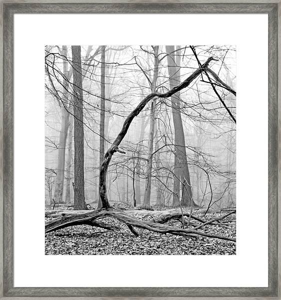 Foggy Morning Deciduous Forest Framed Print