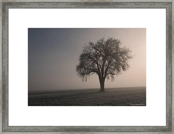 Foggy Morning Sunshine Framed Print