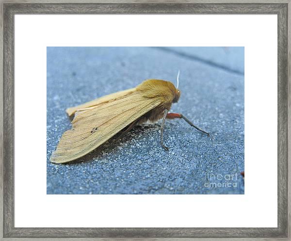 Fokker Moth Framed Print