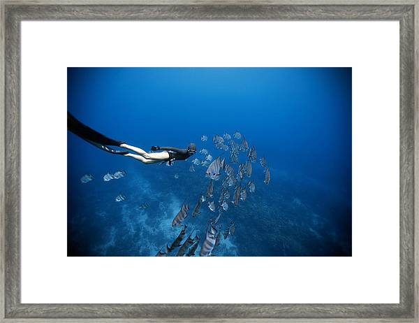 Follow The Fish Framed Print by One ocean One breath