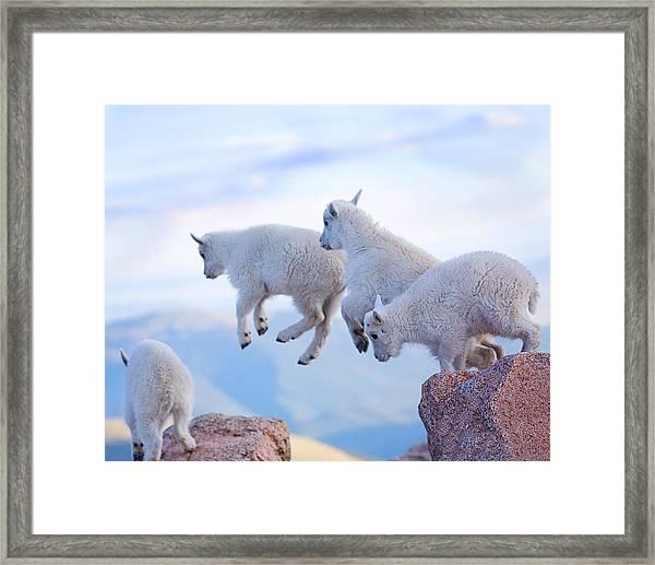 Follow The Leader Framed Print