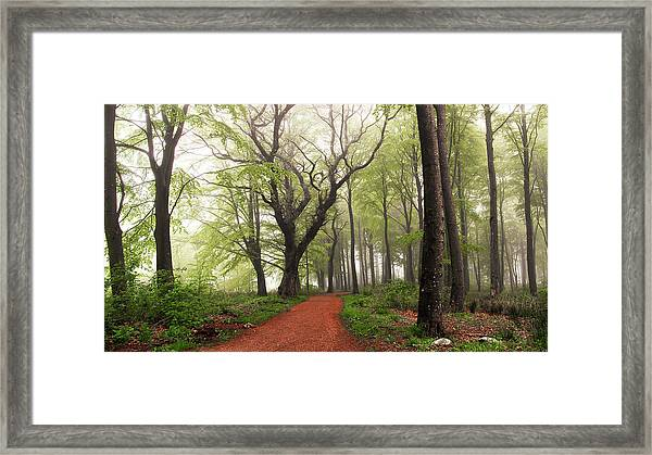 Follow The Red Path. Framed Print