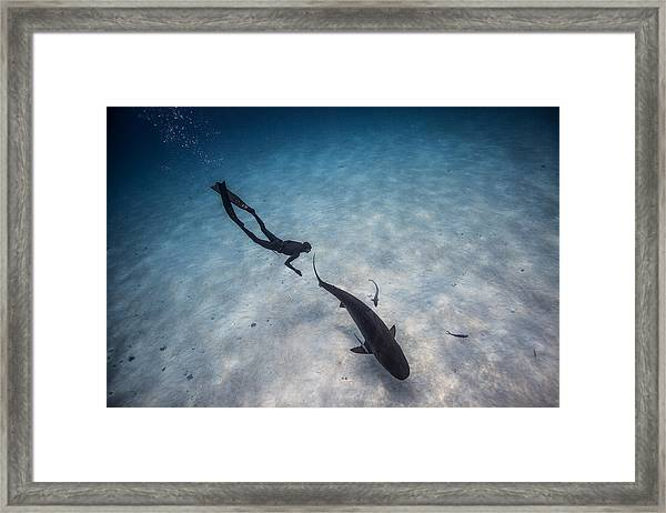 Follow The Tiger Framed Print by One ocean One breath