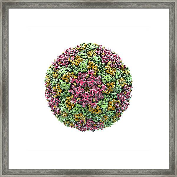 Foot And Mouth Virus Particle Framed Print by Animate4.com/science Photo Libary