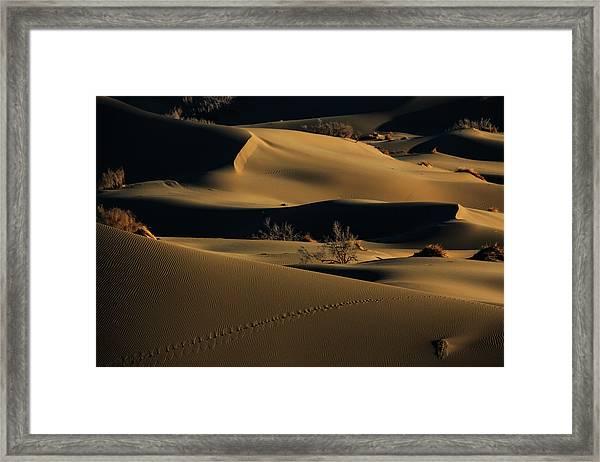 Footprints Framed Print by Babak Mehrafshar (bob)