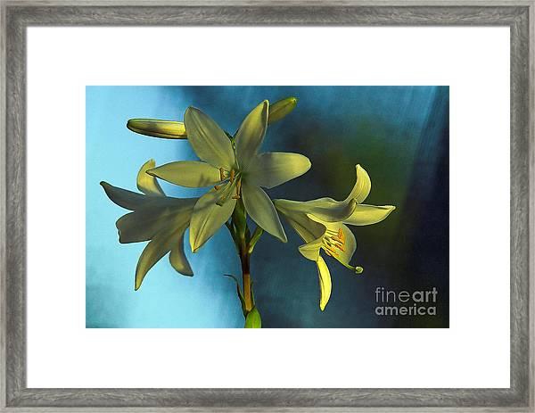 For All Woman In The World Framed Print