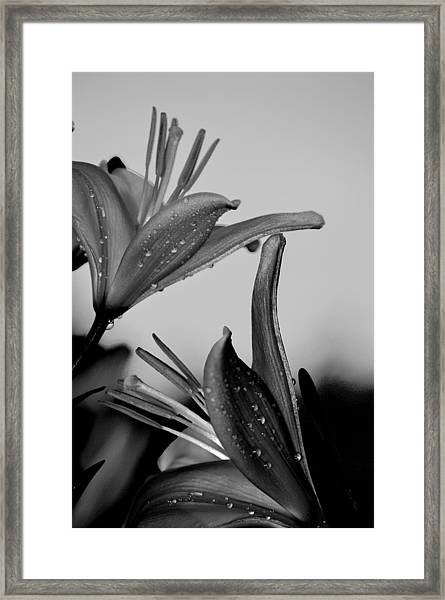 For The Love Of Lillies Bw Framed Print