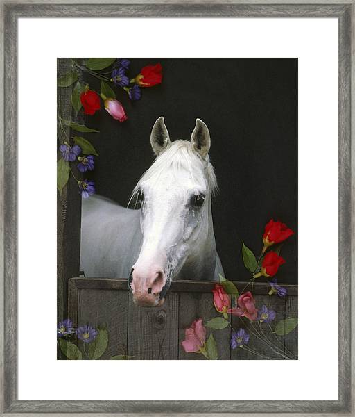 For The Roses Framed Print