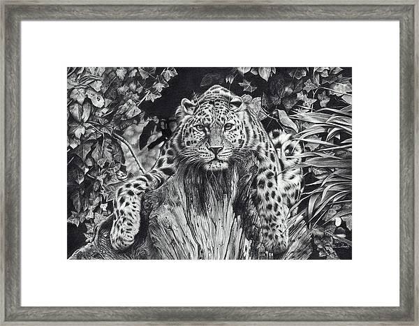 Force Of Nature Framed Print