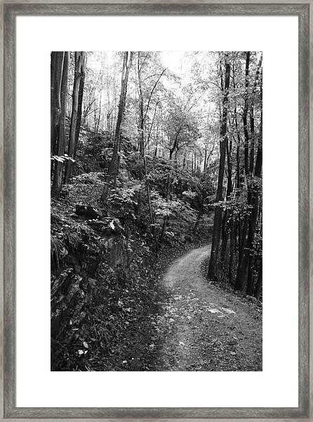 Forest Black And White 12 Framed Print by Falko Follert