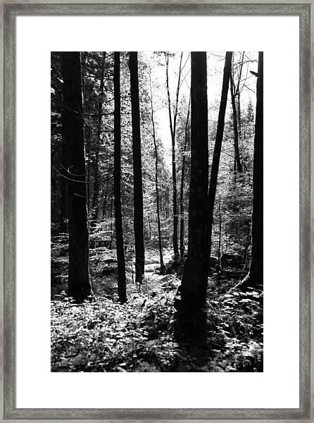 Forest Black And White 13 Framed Print by Falko Follert