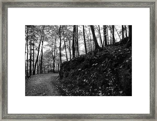 Forest Black And White 5 Framed Print by Falko Follert