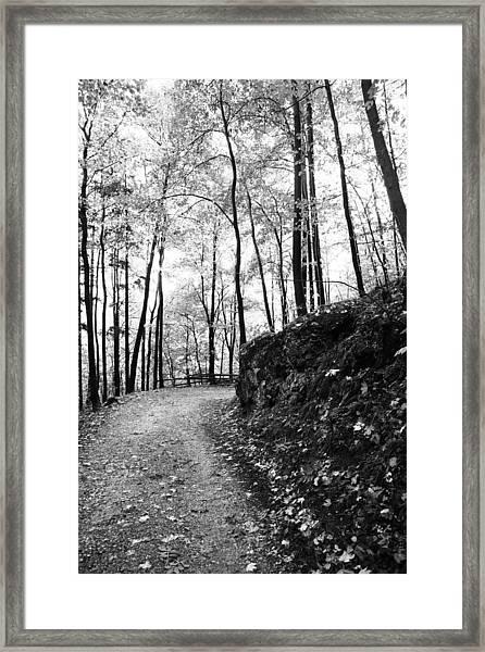 Forest Black And White 6 Framed Print by Falko Follert