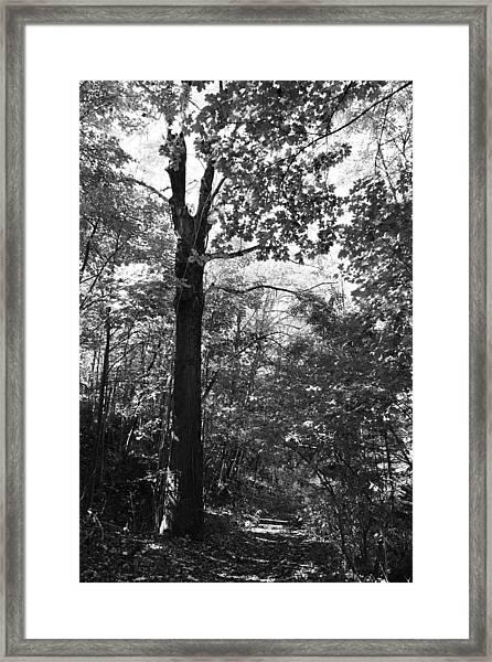 Forest Black And White Framed Print by Falko Follert