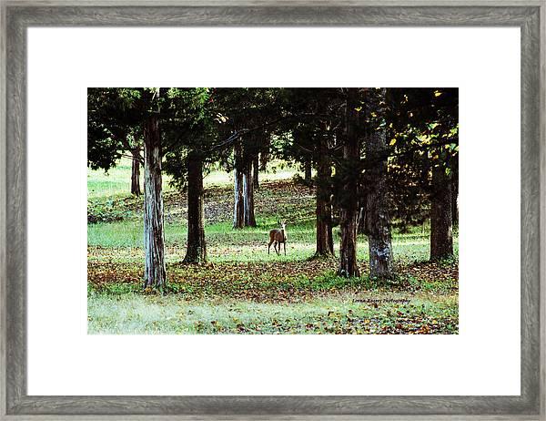 Forest Buck Framed Print
