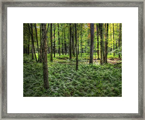 Framed Print featuring the photograph Forest Floor by David Armstrong
