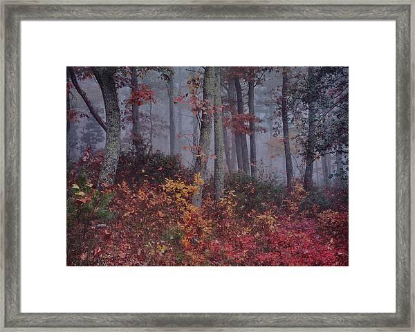 Forest In Fog Framed Print