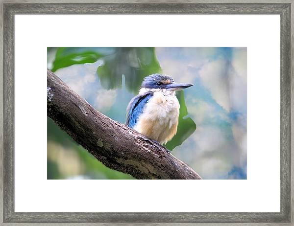 Forest Kingfisher Framed Print