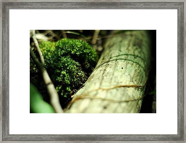 Forest Love Framed Print