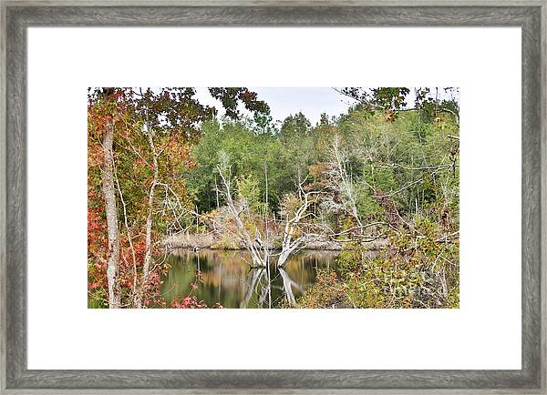 Forest Reflection Framed Print by Mina Isaac