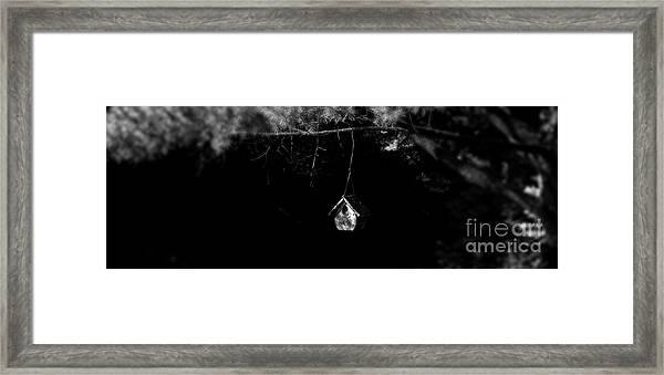 Forest Retreat Framed Print