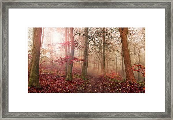 Forest Scene. Framed Print by Leif L??ndal