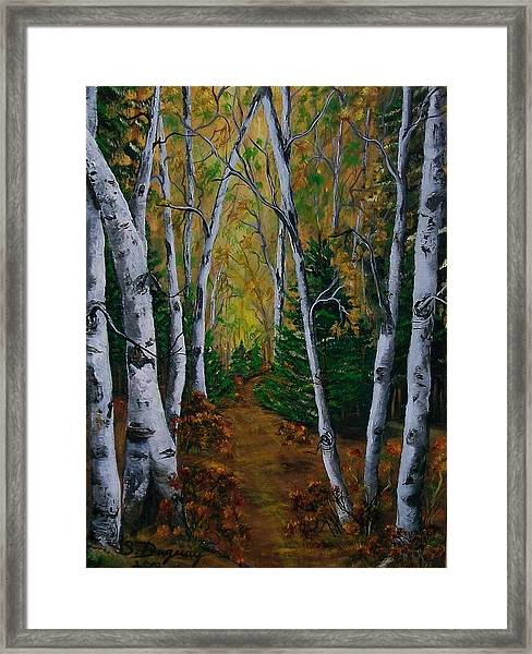 Birch Tree Forest Trail  Framed Print