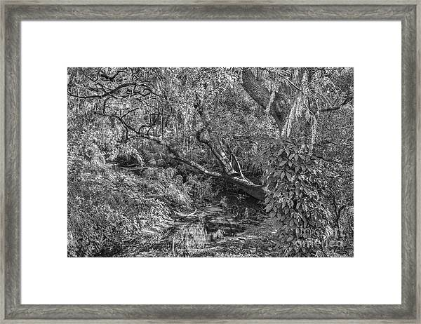 Forest View Framed Print by Mina Isaac